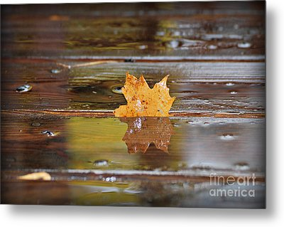 Stuck Maple Leaf Metal Print by Lila Fisher-Wenzel