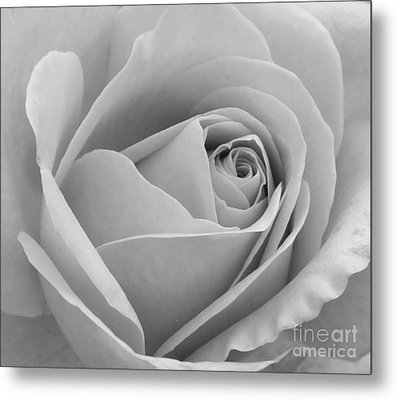Metal Print featuring the photograph Study In Black And White by Cindy Manero