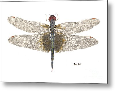 Study Of A Female Black Saddlebags Metal Print by Thom Glace