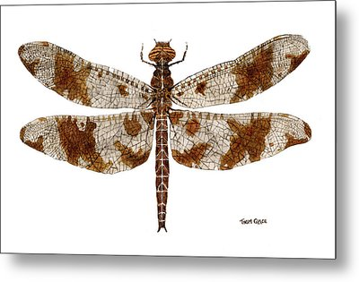 Study Of A Female Filigree Skimmer Metal Print by Thom Glace
