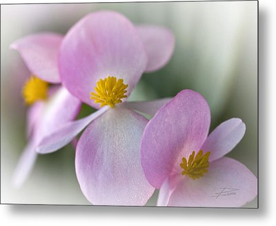 Subtle Blush Metal Print by Barbara  White