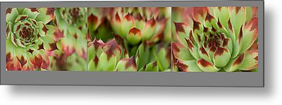 Succulent Metal Print by Trevor Chriss