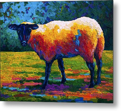 Suffolk Ewe IIi Metal Print