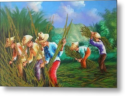 Sugar Cane Harvest Metal Print by Pretchill Smith