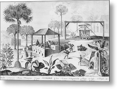 Sugar Production In The West Indies Metal Print by Everett