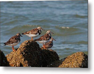 Sullivan's Island Shore Birds Metal Print by Melissa Wyatt