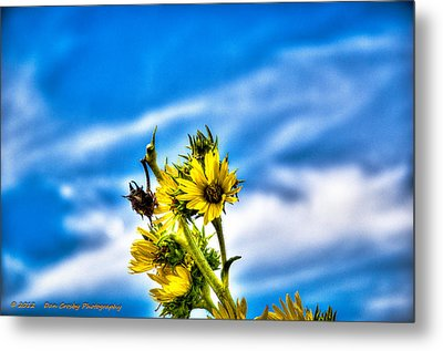 Summer Blooms Metal Print by Dan Crosby
