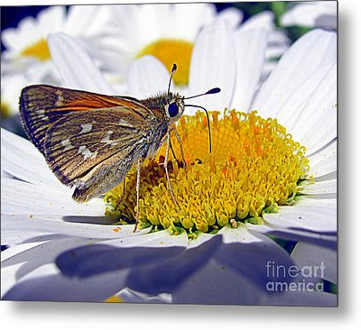 Metal Print featuring the photograph Summer Day by Irina Hays