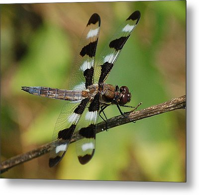Summer Dragonfly Metal Print