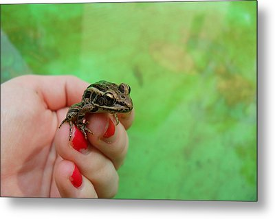 Summer Frog Metal Print by Samantha Howell