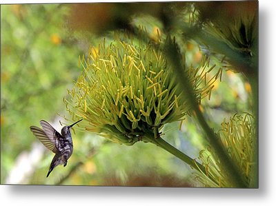 Metal Print featuring the photograph Summer Hummer by Jo Sheehan