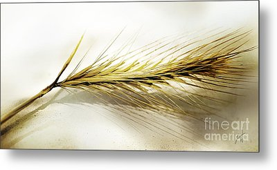 Summer In Ocher Metal Print by Artist and Photographer Laura Wrede