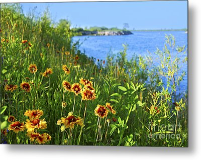 Summer In Toronto Park Metal Print by Elena Elisseeva