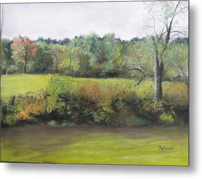 Summer Meadow Metal Print by Cindy Plutnicki