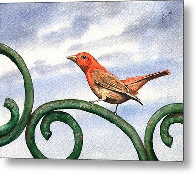 Summer Tanager Metal Print by Sam Sidders
