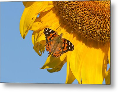 Summer Time Metal Print by Mircea Costina Photography