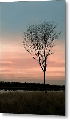 Summer Tree Metal Print