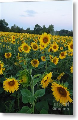 Summers Glory Metal Print