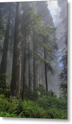 Sun Breaking On Redwoods Metal Print by Greg Nyquist