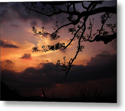 Sun Caught By Branches  Metal Print by Rosvin Des Bouillons