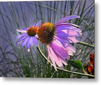 Metal Print featuring the photograph Sun Kissed Cones by Nava Thompson