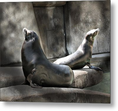 Metal Print featuring the photograph Sunbathing Seals by Mary Almond