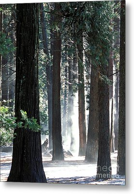 Sunbeams Through The Trees Yosemite National Park Color Metal Print
