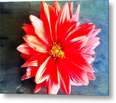 Metal Print featuring the photograph Sunburst by Janice Spivey