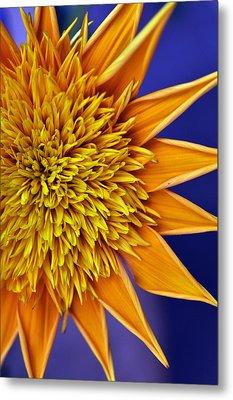Sunburst Metal Print by Sandy Fisher