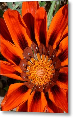 Sunburst Metal Print by Whispering Dove