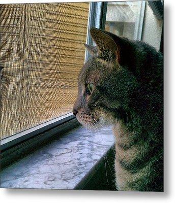 #sunday #cat #kitty #window #gaze Metal Print by Arayon Shaw