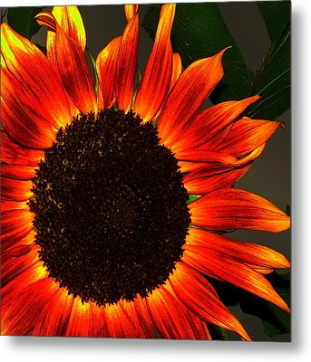 Sunfire Metal Print by Ramona Johnston