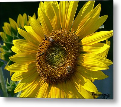 Sunflower 4 Metal Print by EricaMaxine  Price
