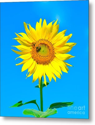 Sunflower And Bee Metal Print by Debbi Granruth
