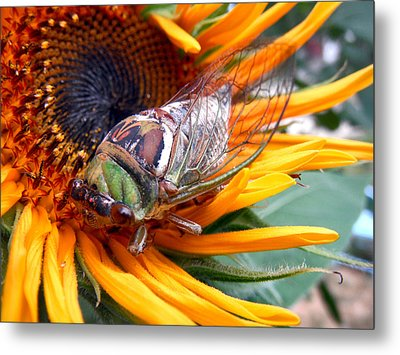 Sunflower And Insect  Metal Print by Jon Baldwin  Art