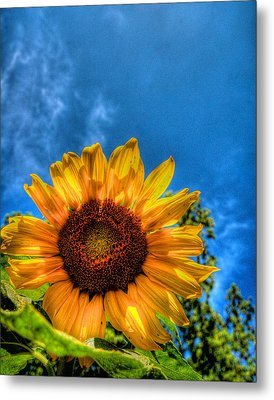Sunflower Metal Print by Andre Faubert