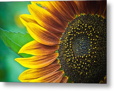 Sunflower Beauty Metal Print