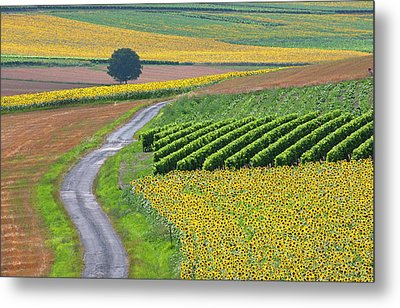 Sunflower Field And Road Metal Print by Peter Smith Images