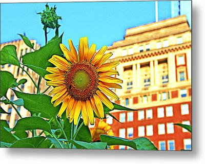 Metal Print featuring the photograph Sunflower In The City by Alice Gipson