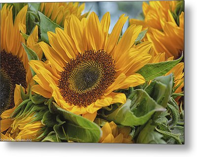 Sunflower Metal Print by Linda Karlin