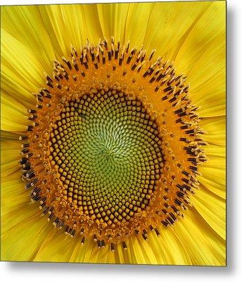 Sunflower Magic Metal Print by Lou Belcher