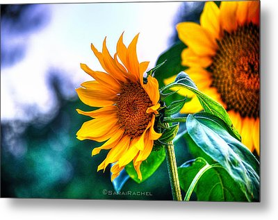 Sunflower Smile Metal Print by Sarai Rachel