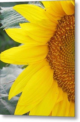 Sunflower Sun Metal Print