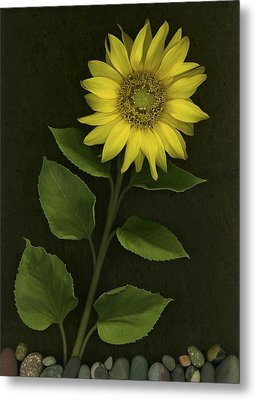 Sunflower With Rocks Metal Print by Deddeda