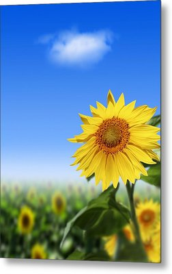 Sunflowers, Artwork Metal Print by Victor Habbick Visions