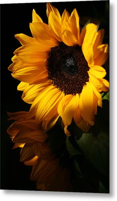 Sunflowers Metal Print by Dorothy Cunningham