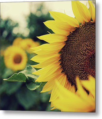 Sunflowers Metal Print by Kirstin Mckee