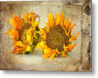 Sunflowers No 413 Metal Print by James Bethanis