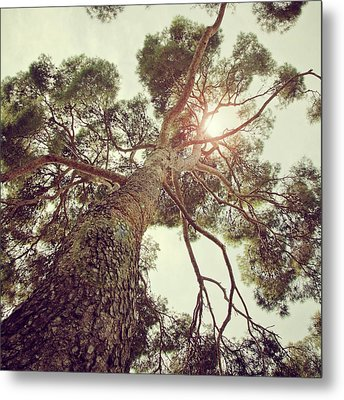 Sunlight Passing Through Branches Of Tree Metal Print by Sbk_20d Pictures