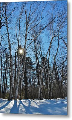 Sunlight Through Birches Metal Print by Mary McAvoy